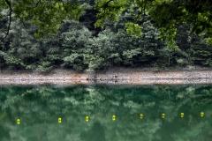 BwL_02_Gelbgrün
